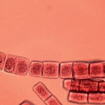 Eksperyment Jądro komórkowe
