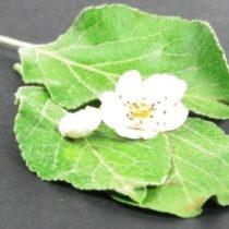 Kompletny zestaw eksperymentalny: Badamy kwiaty
