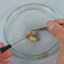 Kompletny zestaw eksperymentalny: Budowa nasion roślin