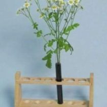 Kompletny zestaw eksperymentalny: Zaopatrzenie roślin w wodę