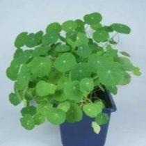 Kompletny zestaw eksperymentalny: Warunki niezbędne do fotosyntezy - obieg tlenku węgla