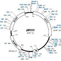 Kompletny zestaw eksperymentalny: Bakteryjny plasmid DNA w elektroforezie żelowej